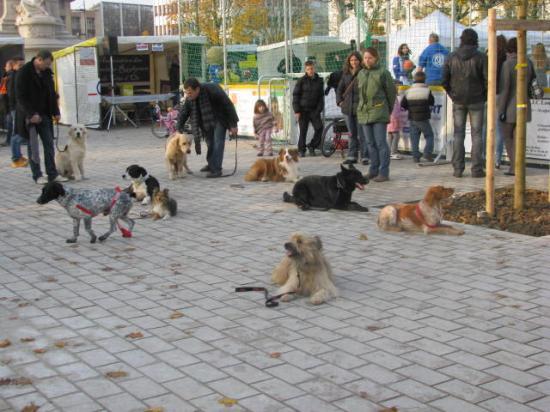 Des chiens bien dressés